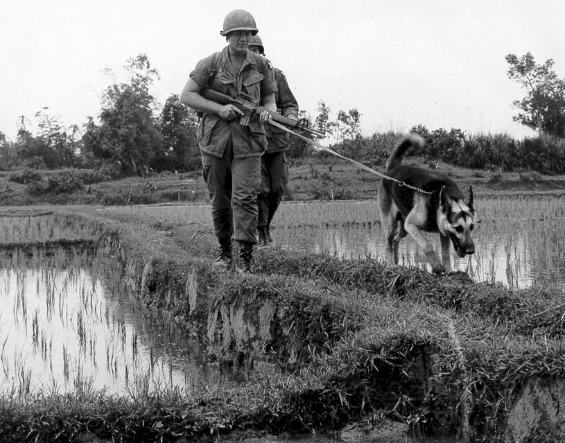 Vietnam War Dogs, Vietnam Veteran News, Mack Payne